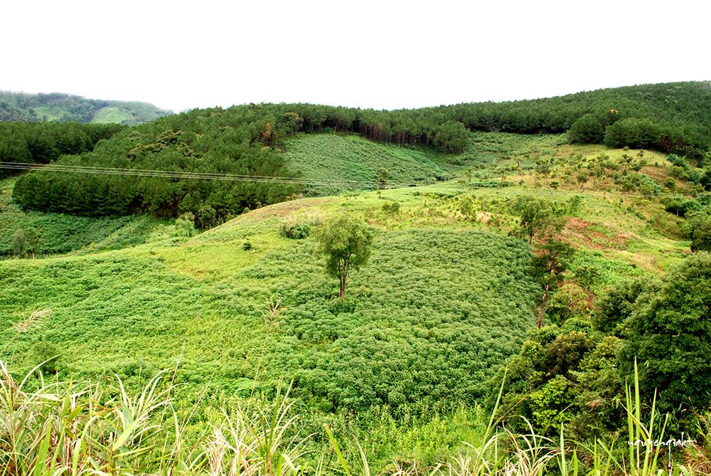 Nhật ký hành trình  Tu mơ rông - Vùng đất của cây Sâm