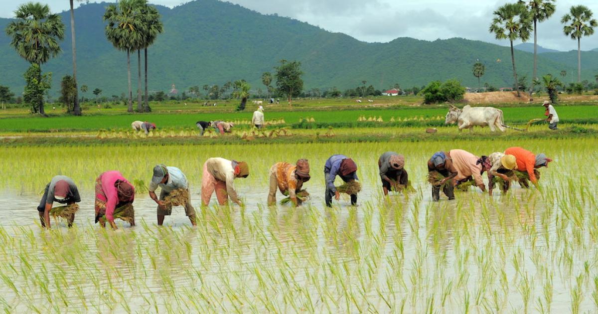 Dù Việt Nam có lượng gạo xuất khẩu cao trên thế giới, nhưng vẫn nhập gạo Campuchia.