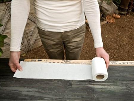 gieo hạt bằng giấy vệ sinh 1