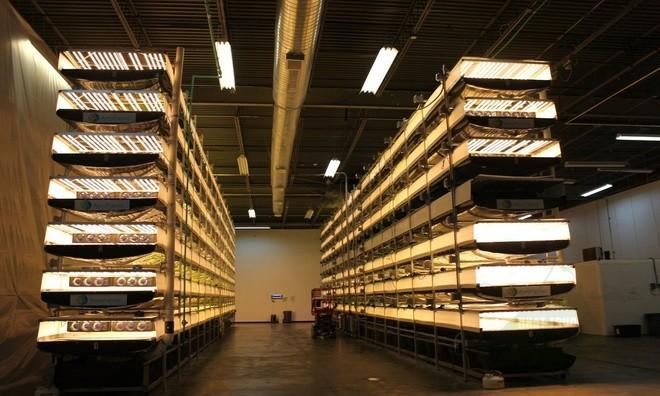 AeroFarms cung cấp rau sạch quanh năm cho New York và New Jersey với mức giá rẻ ngang rau diếp hữu cơ.