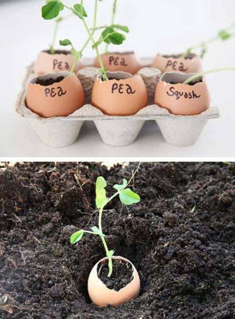 Thay vì phải mua những chiếc rổ nhỏ hoặc bịch nylon để ươm hạt, chỉ cần lấy vỏ trứng và cho thêm ít đất vào là bạn có thể bắt đầu ươm giống cây trồng hiệu quả