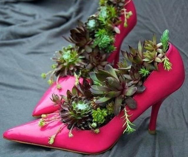 trồng hoa trên giày 1