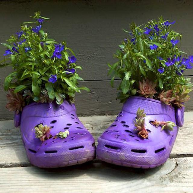 trồng hoa trên giày