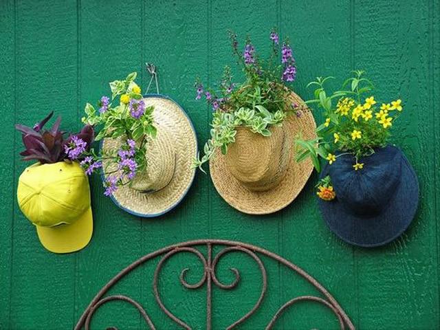 trồng hoa trên mũ