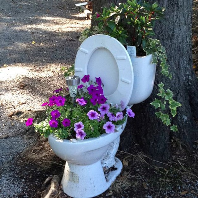 trồng hoa trồng bồn cầu