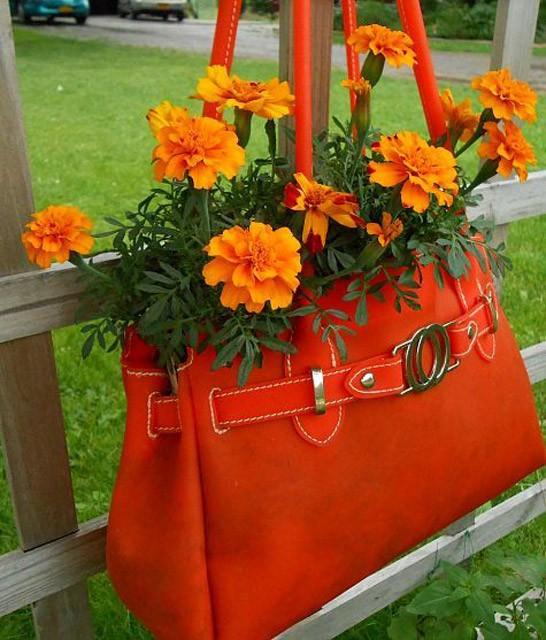 trồng hoa trong giỏ xách