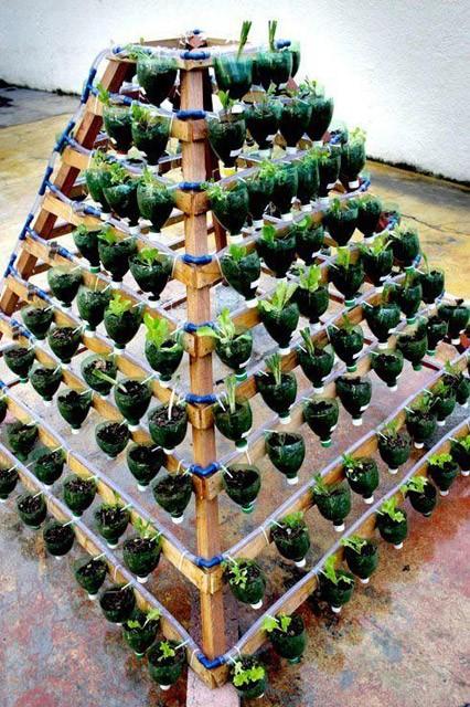 trồng hoa trong vỏ chai nhựa