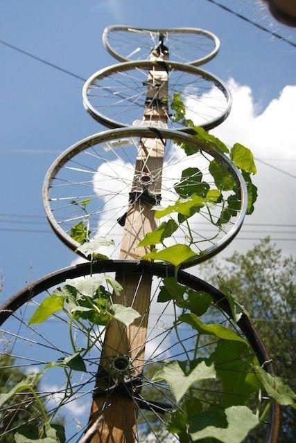 trồng hoa trong vỏ xe đạp