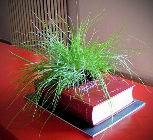 trồng hoa trong xách