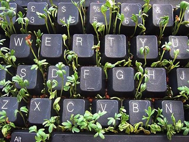 trồng rau bàn phím