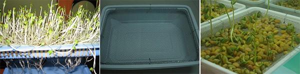 Trồng rau bằng phương pháp thủy canh 2