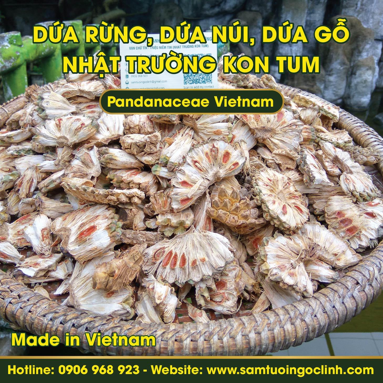 Dứa rừng, Dứa núi, Dứa gỗ Kon Tum Việt Nam - Pandanaceae Vietnam