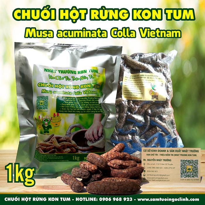 Chuối hột rừng Kon Tum