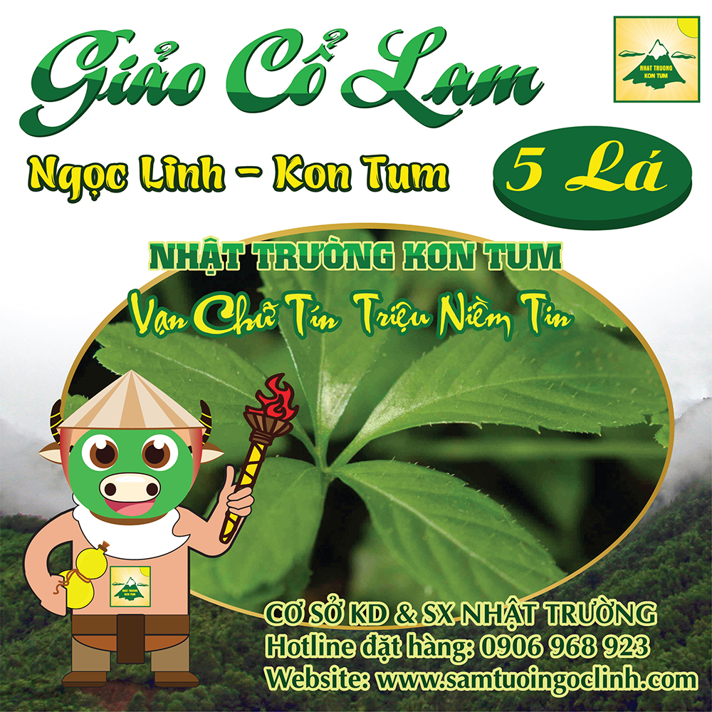 Giảo Cổ Lam Ngọc Linh Kon Tum Nhật Trường