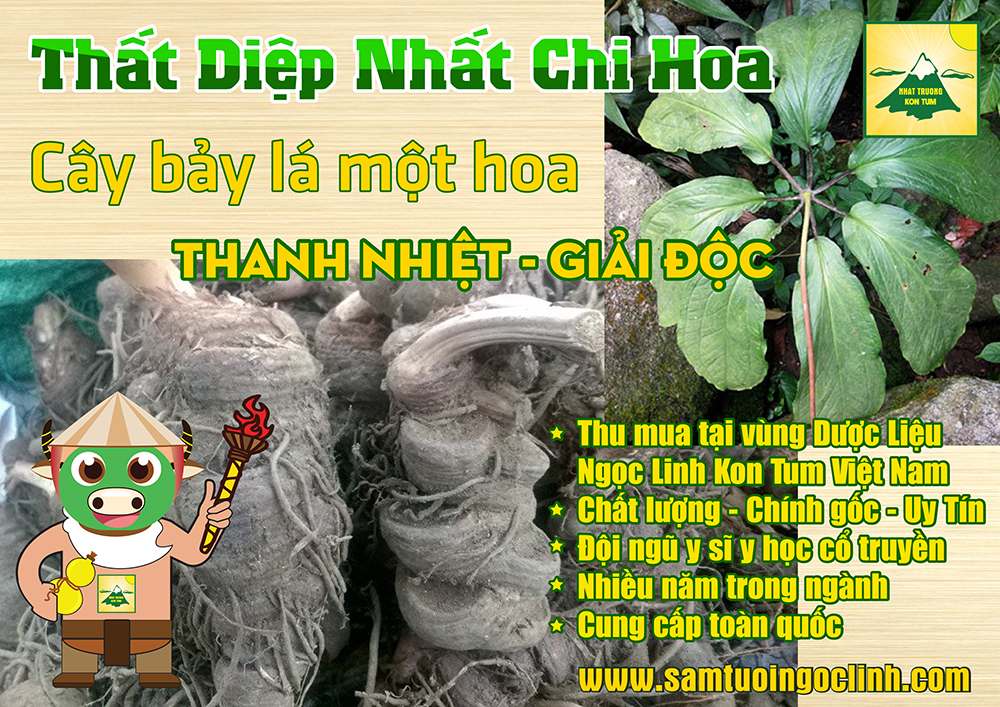 that diep nhat chi hoa sam bay la 1