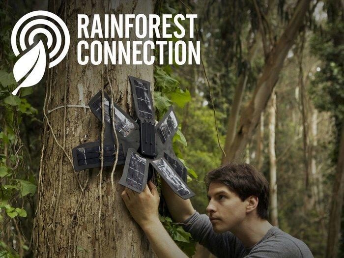 Bảo vệ rừng là một nhiệm vụ cấp bách hiện nay