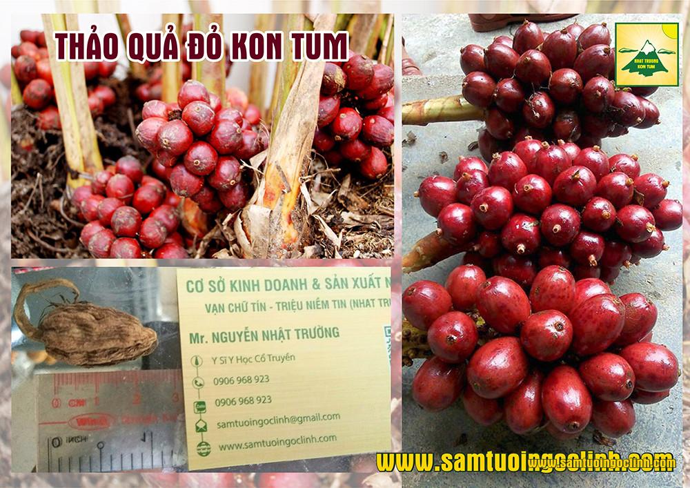 thảo quả xanh và đỏ (8)